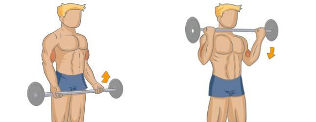 Curl biceps barre droite