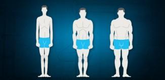 morphologie masculine musculation