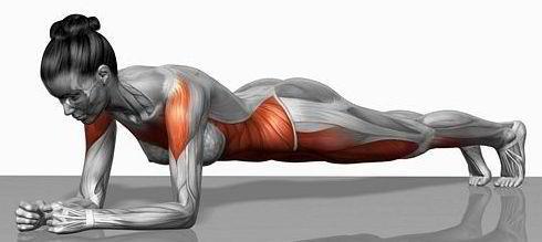 Muscles profonds, pour qui? pourquoi? comment?